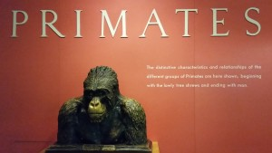museum of natural history new york